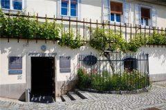 Vid en Eslovenia da frutos hace 500 años – Old Vine House