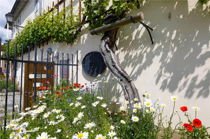 The Old Vine House Eslovenia (3)