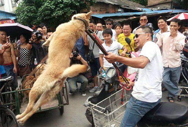 carne de perro en china (1)