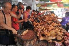 El polémico festival chino donde se comieron 10 mil perros
