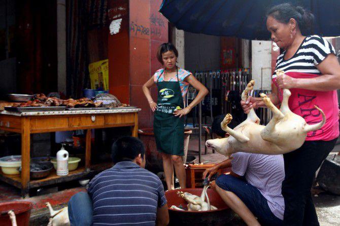 carne de perro en china (4)
