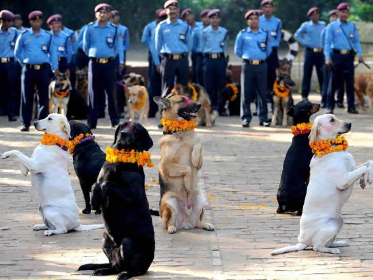 festival perros nepal (1)