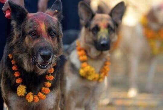 festival perros nepal (2)