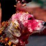 Kukur Tihar, festival en Nepal que homenajea la lealtad de los perros