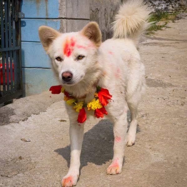 festival perros nepal (7)