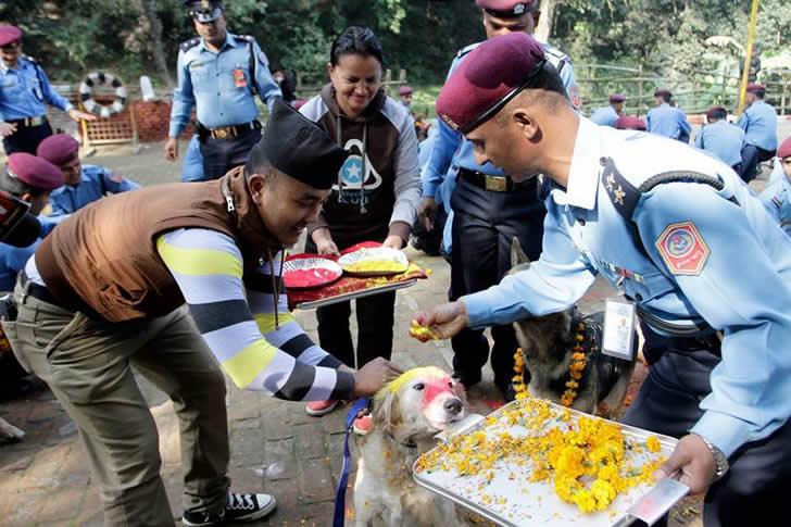 festival perros nepal (8)