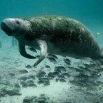 Los humanos están provocando la sexta extinción en masa de la Tierra