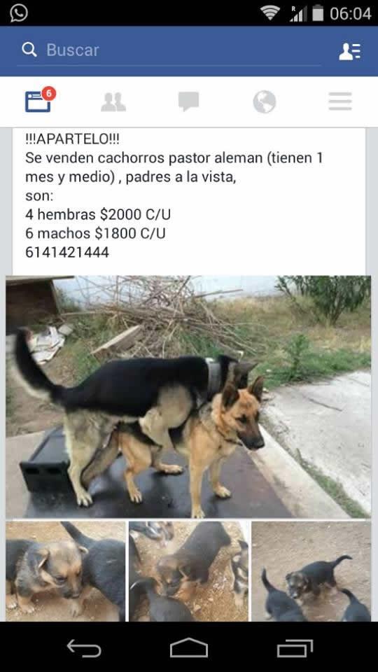 Marcianadas_186_03072015 (284)