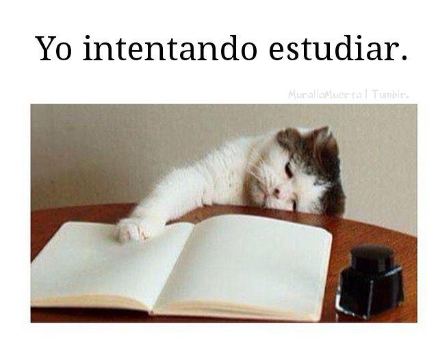 Marcianadas_187_1007151248 (173)
