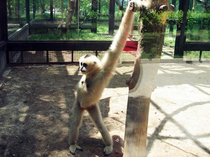 animales posando cámara foto_03