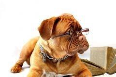 Conoce el origen de 7 razas de perro