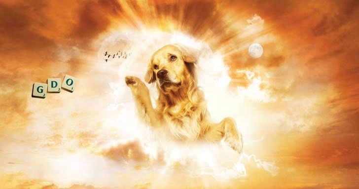 perro dios