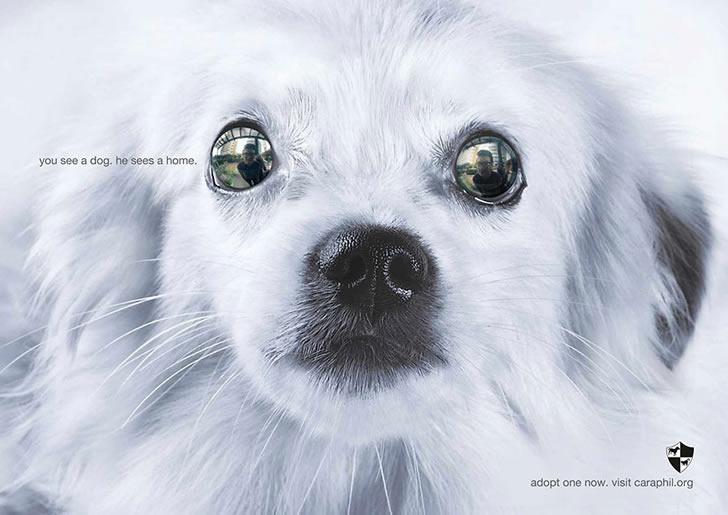publicidad poderosas animales-30