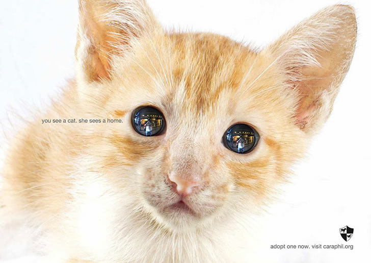publicidad poderosas animales-31