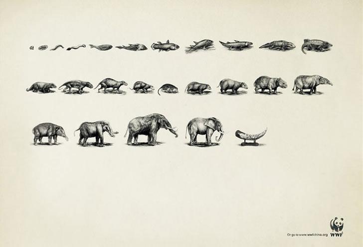 publicidad poderosas animales-33