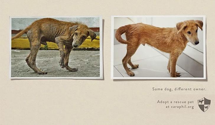 publicidad poderosas animales-38