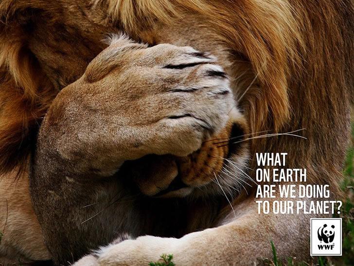 publicidad poderosas animales-49