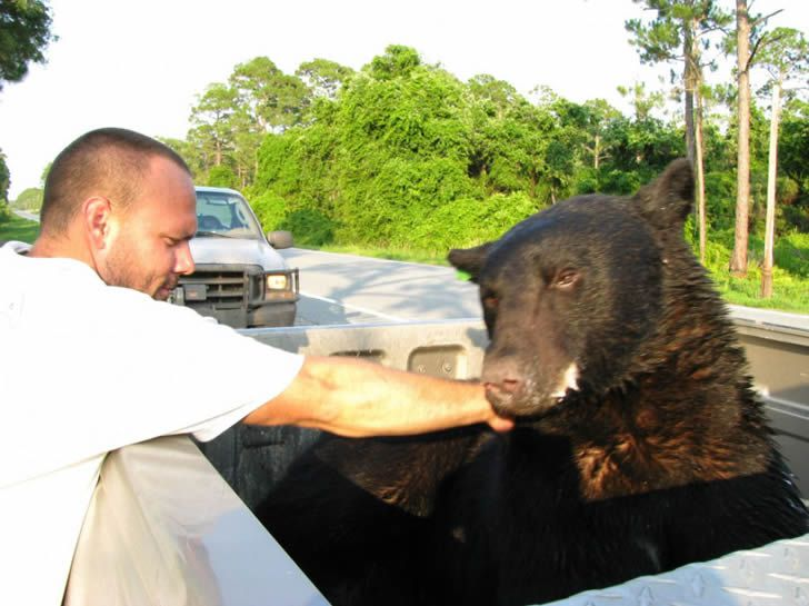 Adam Warwick rescate oso (11)