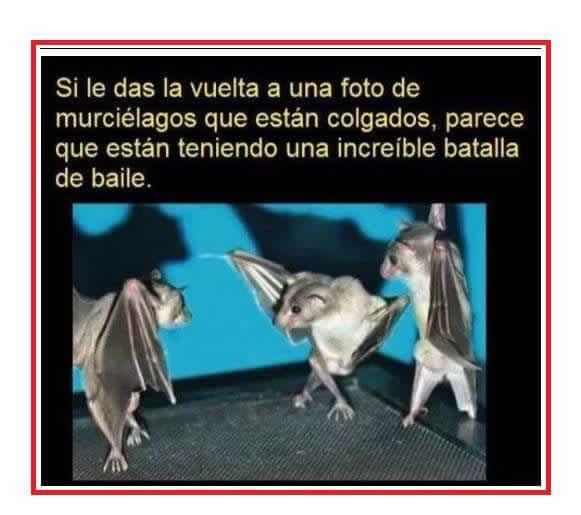 Marcianadas_191_070815 (177)