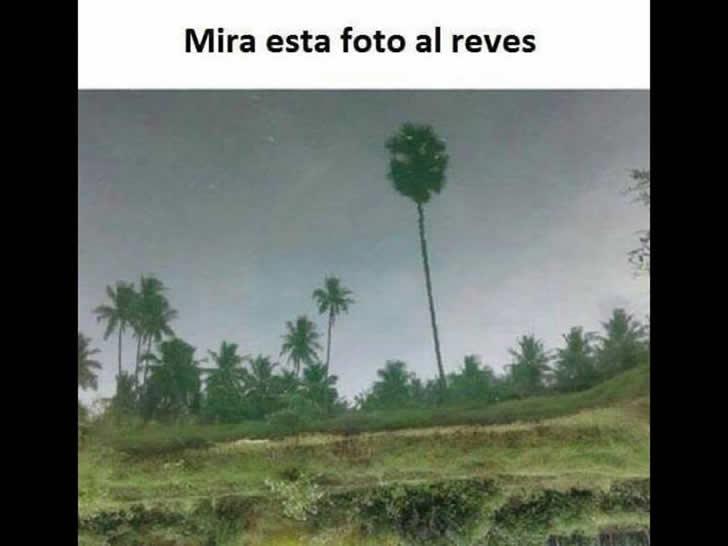 Marcianadas_192_14ago20150958 (352)