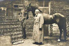 Inteligente Hans, el caballo que sabía matemáticas