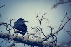 ¿Qué son los cuervos de Hempel?
