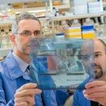 Científicos reprograman células cancerígenas y las regresan a su estado normal