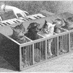 Katzenklavier, un piano hecho de gatos