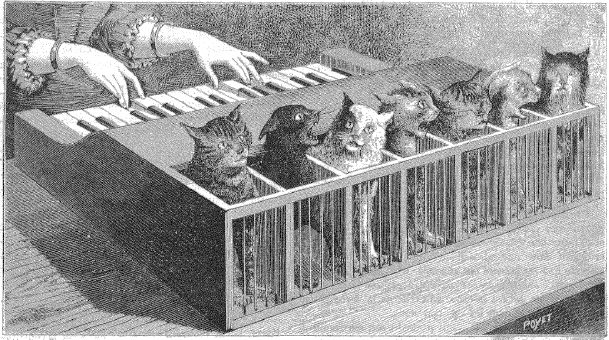 piano gatos