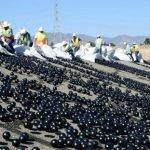 Las esferas plásticas negras que prevendrán la sequía en California + VIDEOS