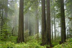 Los 10 bosques más devastados del planeta