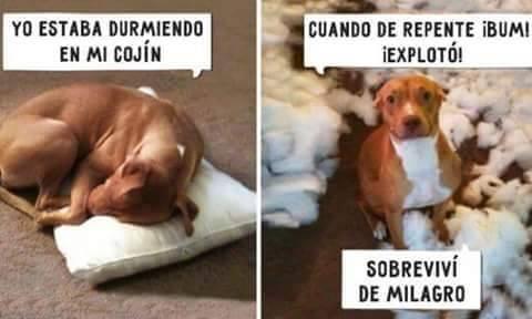 Marcianadas_197_1809150908 (88)