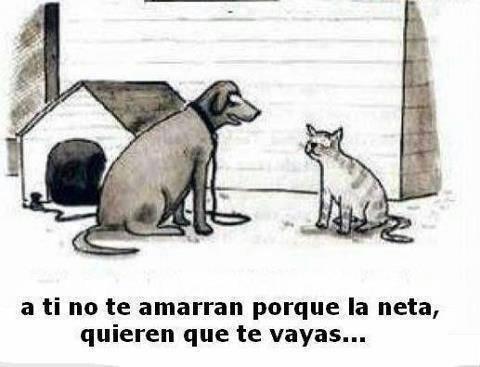 Marcianadas_198_2509150000 (50)