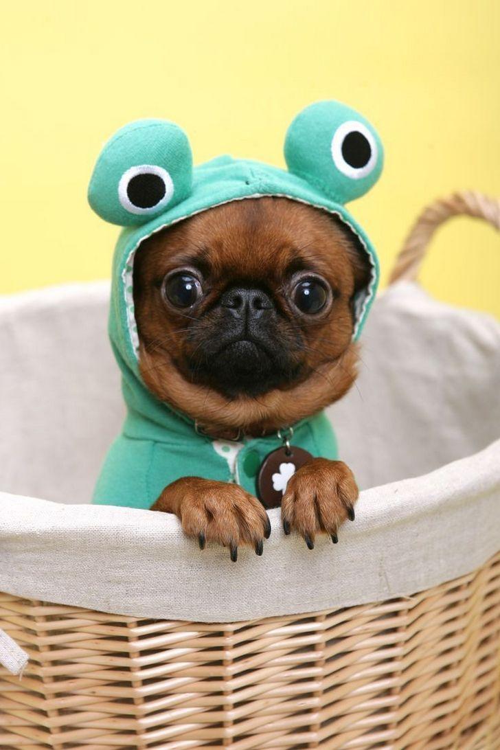 perros divertidos (5)