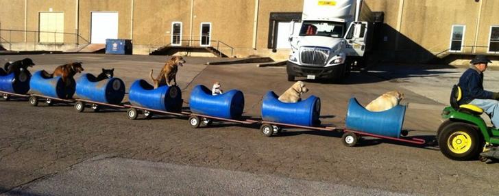 perros tren (1)