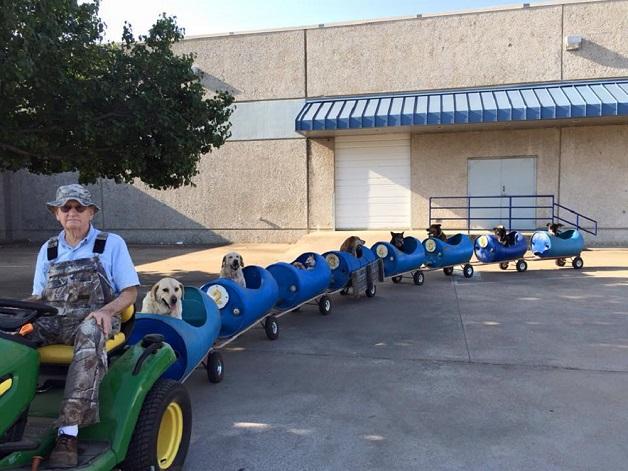 perros tren (3)