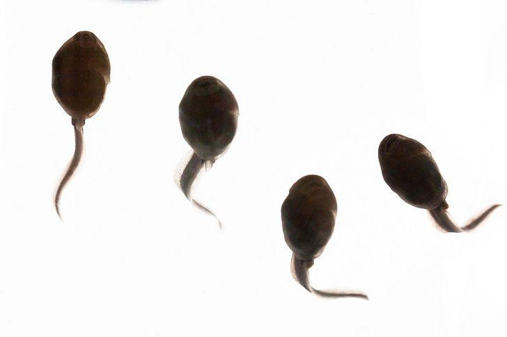 8 descubrimientos científicos que validan la evolución
