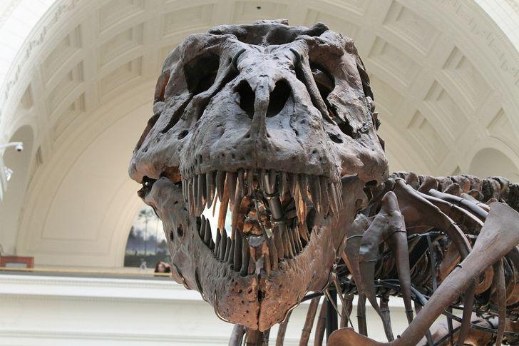 tyrannosaurus fosiles