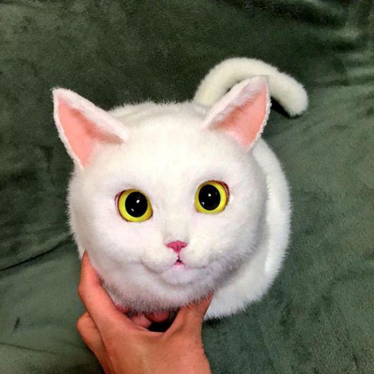 bolsas gato japon Pico (1)