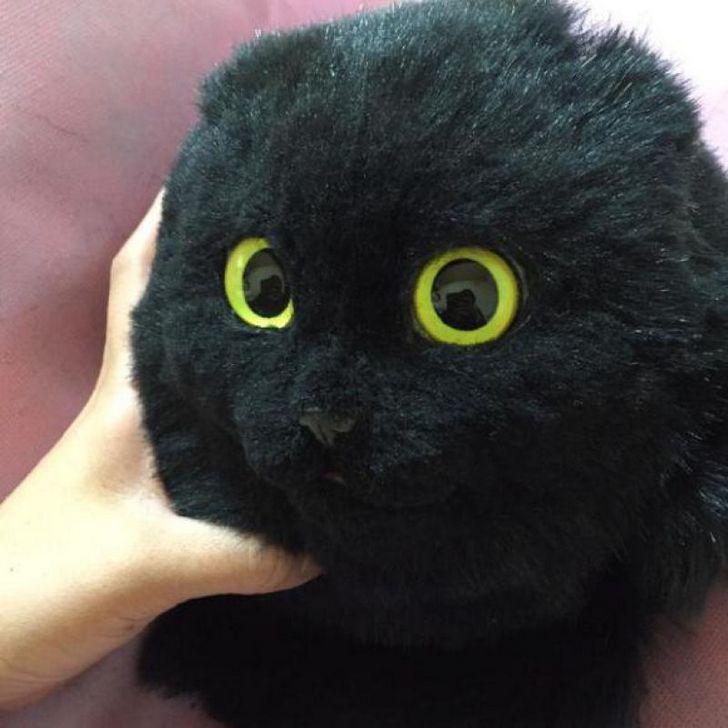 bolsas gato japon Pico (7)