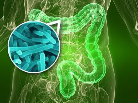 intestino bacterias