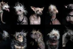 Los 10 perros más feos del mundo