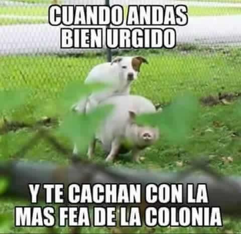 Marcianadas_207_2711150953 (74)