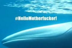 El primer video de una ballena Omura