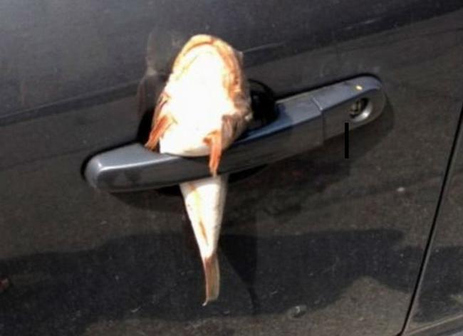 estacionaste en el lugar equivocado (332)