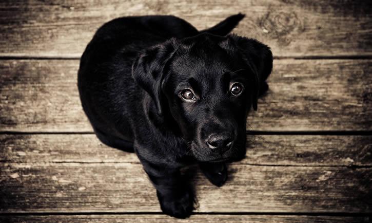 fotografía perro negro