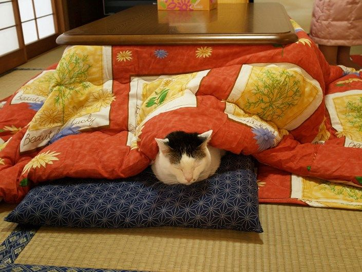 kotatsu japon cama (2)