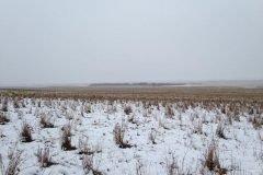 Hay 550 ovejas escondidas en la foto, ¿puedes encontrarlas?