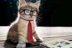 gato intelectual