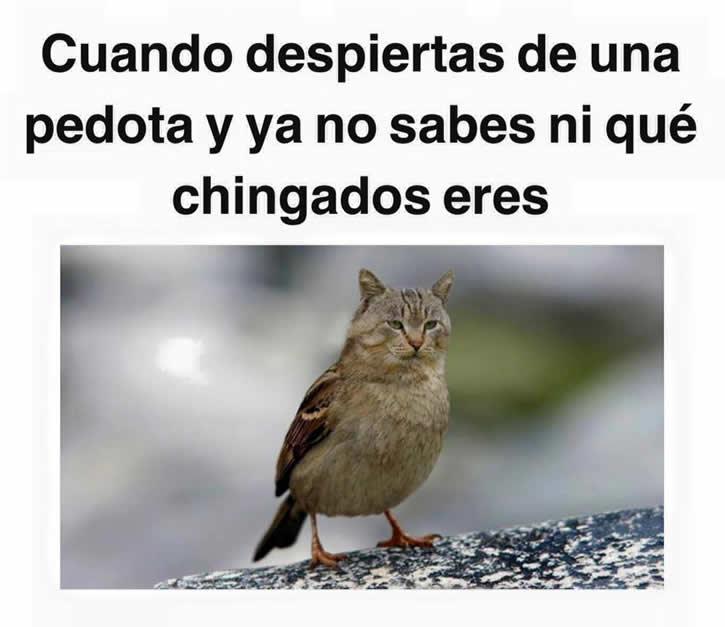 Marcianadas_209_1112150000 (264)